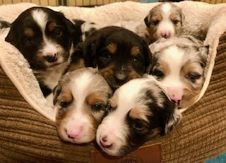 puppy faces